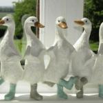 Kitchen ducks!